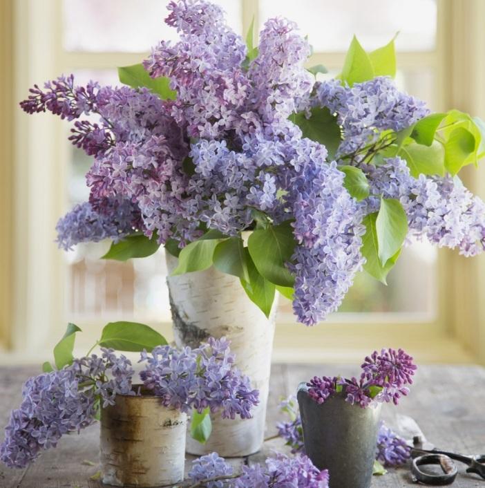 cvijece-3