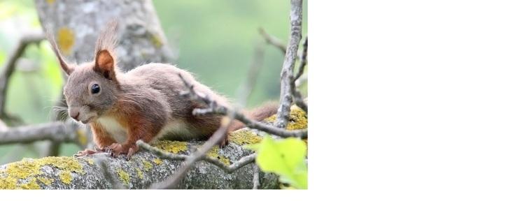 vjeverica 2